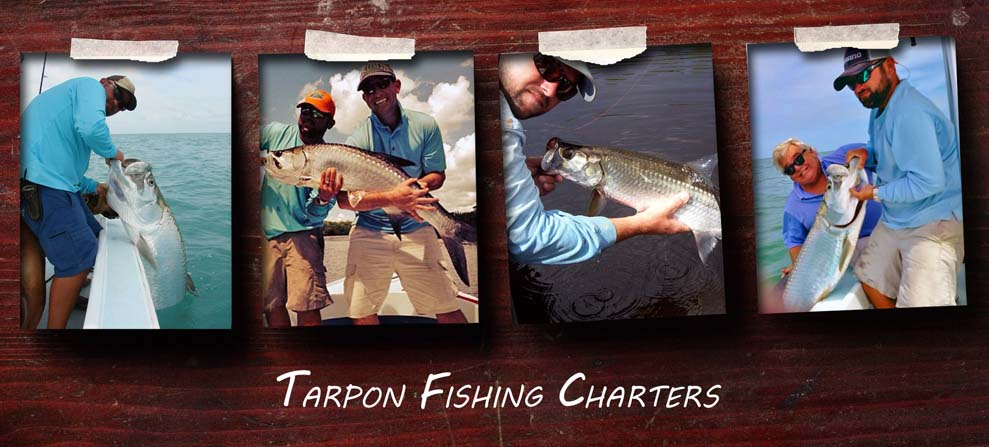 fort myers tarpon fishing guides, fort myers tarpon fishing charters, tarpon fishing guides fort myers beach sanibel island